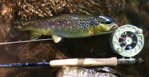 Spring Creek 091613